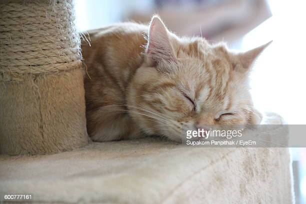 Close-Up Of Cat Sleeping On Scratching Post