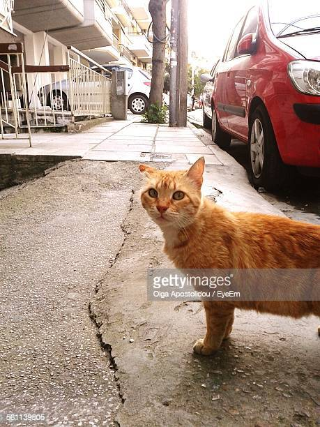 Close-Up Of Cat Standing In Street