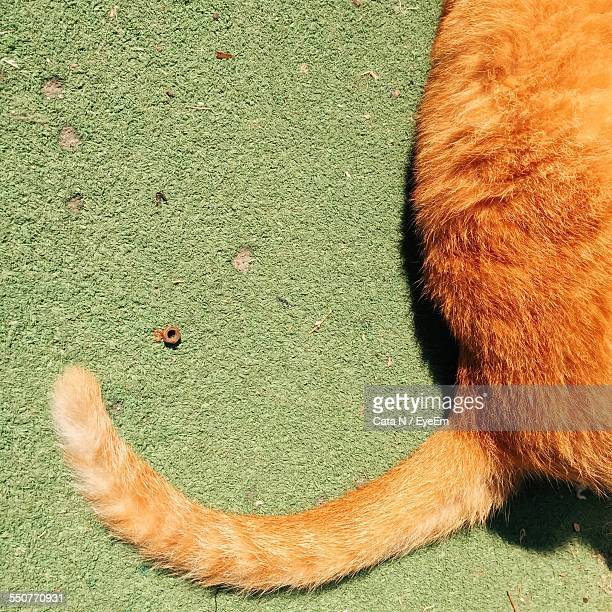 Close-Up Of Cat Tail On Carpet