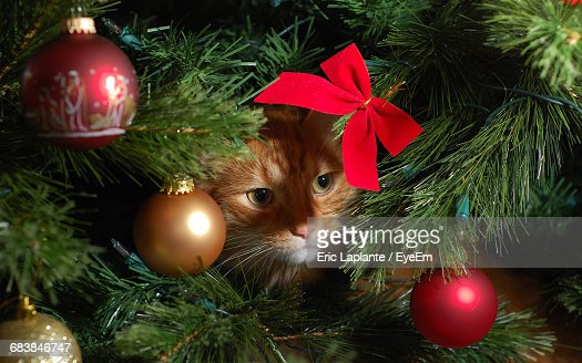 Close-Up Of Cat Underneath The Christmas Tree