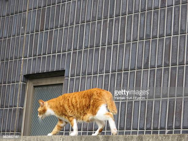 Close-Up Of Cat Waking On Wall