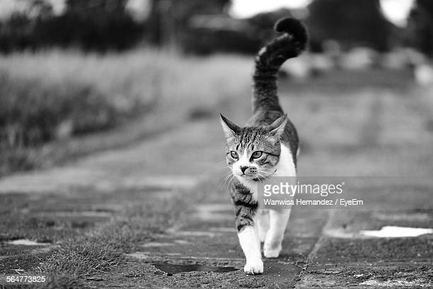 Close-Up Of Cat Walking On Footpath