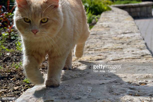 Close-Up Of Cat Walking On Retaining Wall