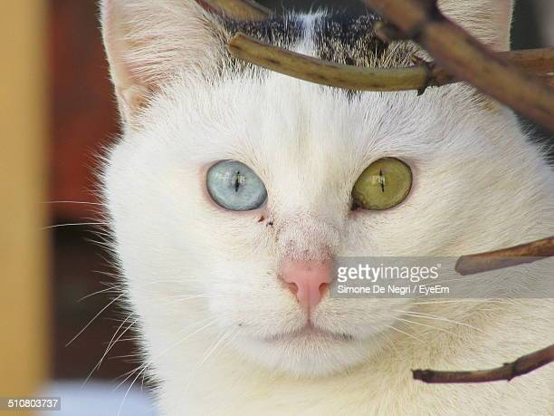 Close-up of cat with blue and green eyes
