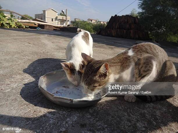 Close-Up Of Cats Eating
