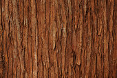 Close-up of cedar tree texture background.