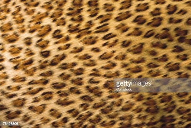 Close-up of cheetah fur