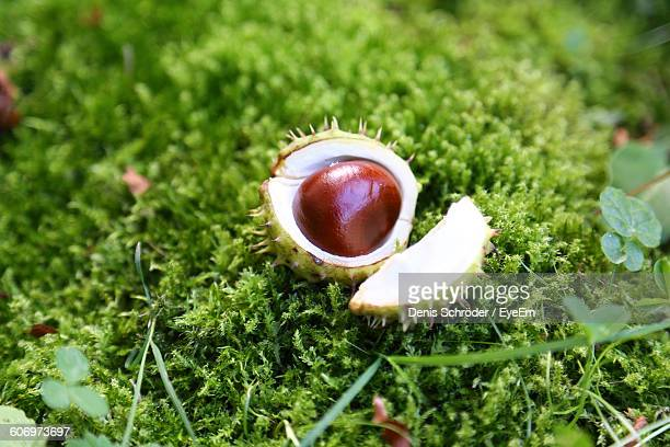Close-Up Of Chestnut Fallen On Field