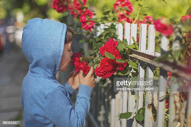 Close-Up Of Child Smelling Rose