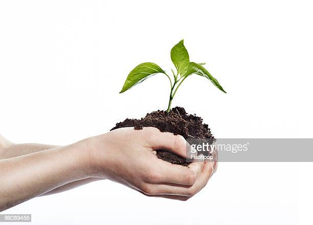 Close-up of child's hands holding seedling