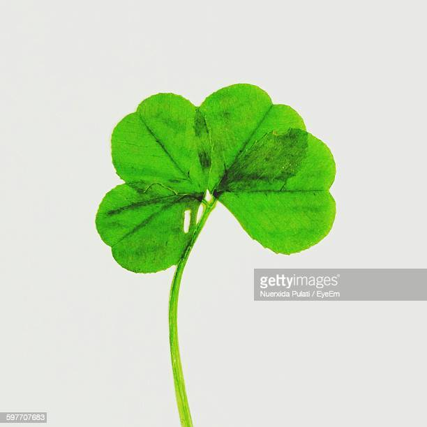 Close-Up Of Clover Leaves Against White Background