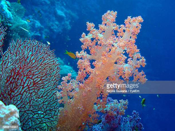 Close-Up Of Coral Reef In Sea