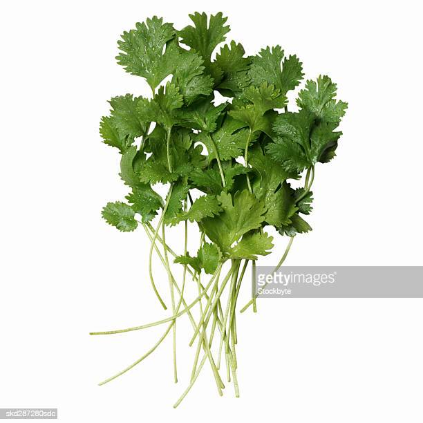 Close-up of coriander