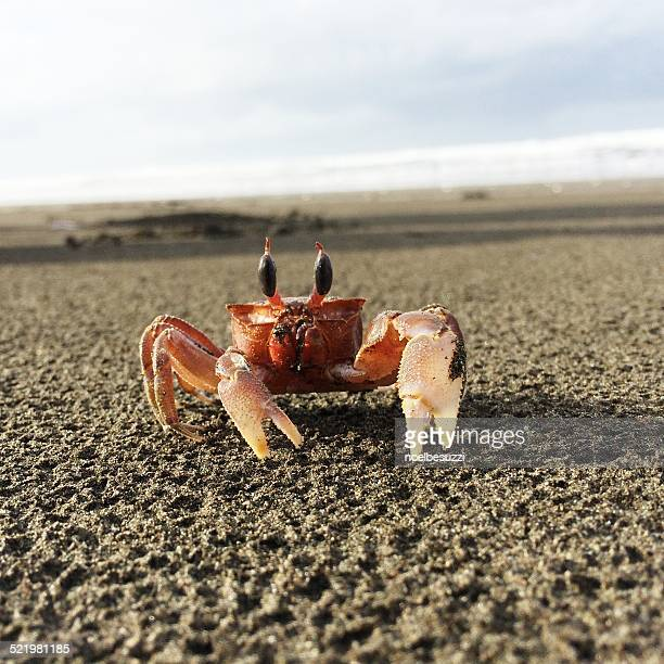 Close-up of crab on beach