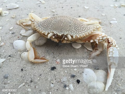 Close-up of crab