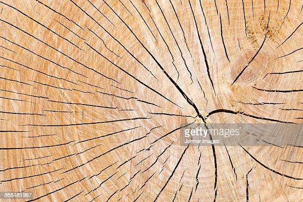 Close-up of cracked wood