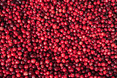 Closeup of cranberries in the central market of Riga
