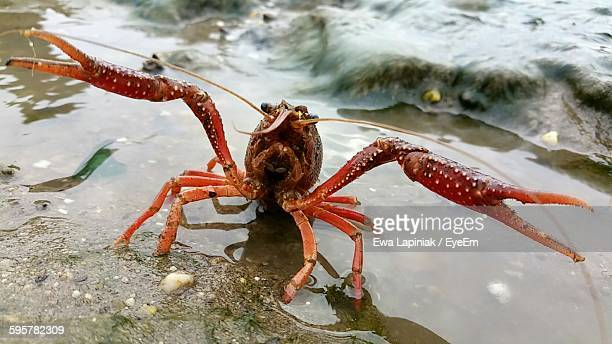 Close-Up Of Crayfish On Shore