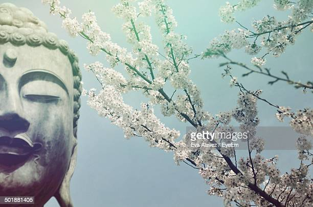 Close-up of cropped Buddha statue and flower tree against clear sky