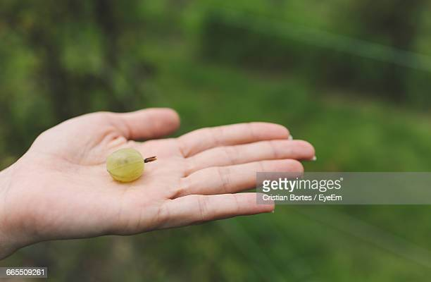 Close-Up Of Cropped Hand Holding One Gooseberry