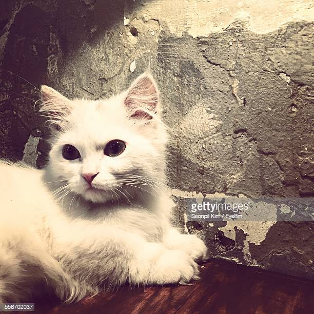 Close-Up Of Cute Cat Sitting On Table Against Wall