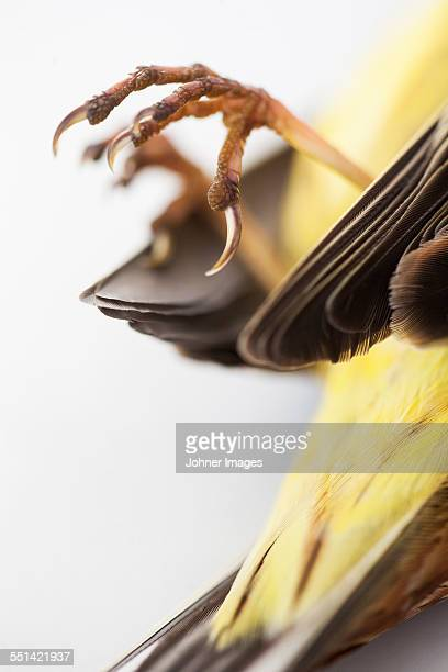 Close-up of dead bird claws