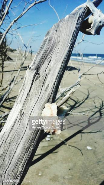 Close-Up Of Dead Tree Trunk