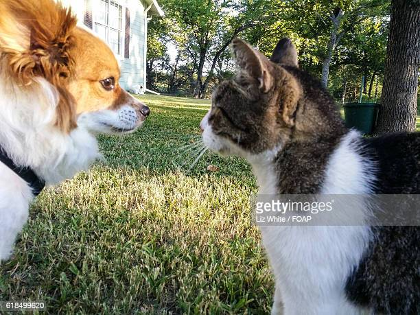 Close-up of dog and cat