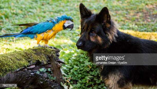 Close-Up Of Dog And Gold And Blue Macaw Outdoors