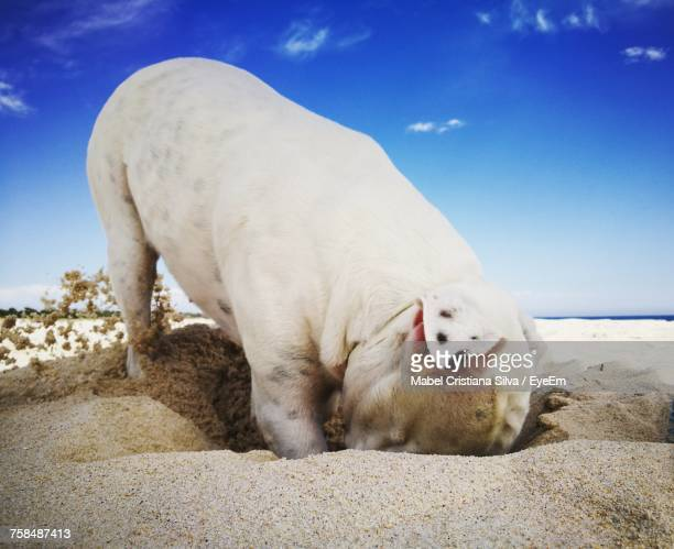 Close-Up Of Dog Digging On Beach Against Sky