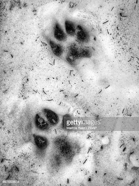 Close-up of dog footprints
