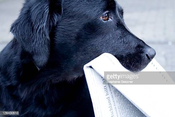 Close-up of dog holding newspaper in its mouth