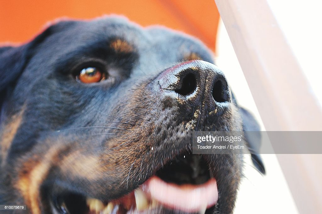 Close-Up Of Dog Looking Up