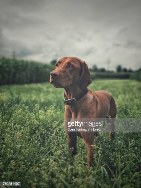 Close-Up Of Dog On Field Against Sky