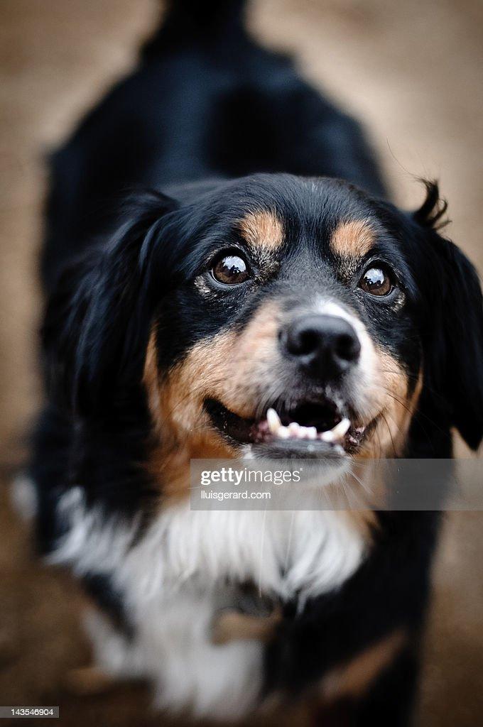 Close-up of dog : Stock Photo