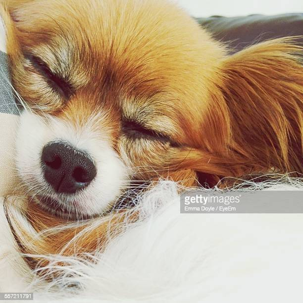 Close-Up Of Dog Sleeping