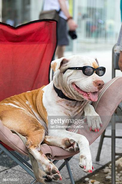 Close-Up Of Dog Wearing Sunglasses Resting On Chair