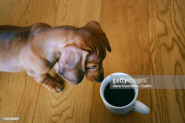 Close-Up Of Dog With Coffee Cup On Table