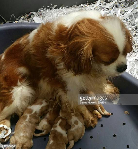 Close-Up Of Dog With Puppy