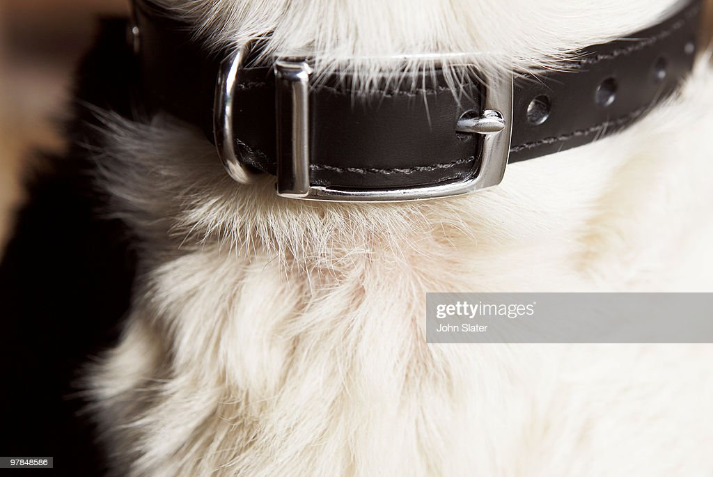 close-up of dog's collar