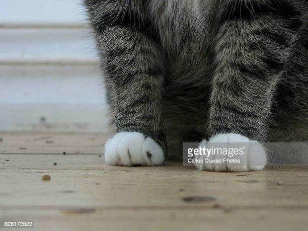 Close-up of domestic cat paws