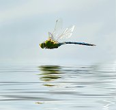Close-Up Of Dragonfly Flying Over River