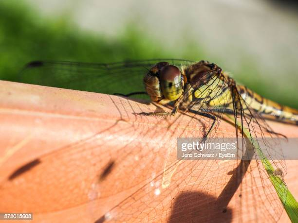 Close-Up Of Dragonfly On Metal