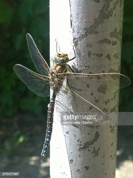 Close-Up Of Dragonfly On Stem Outdoors