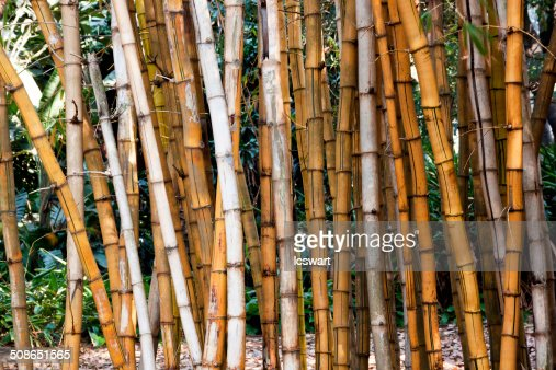 Closeup of Dry Bamboo Patterns and Textures : Stock Photo