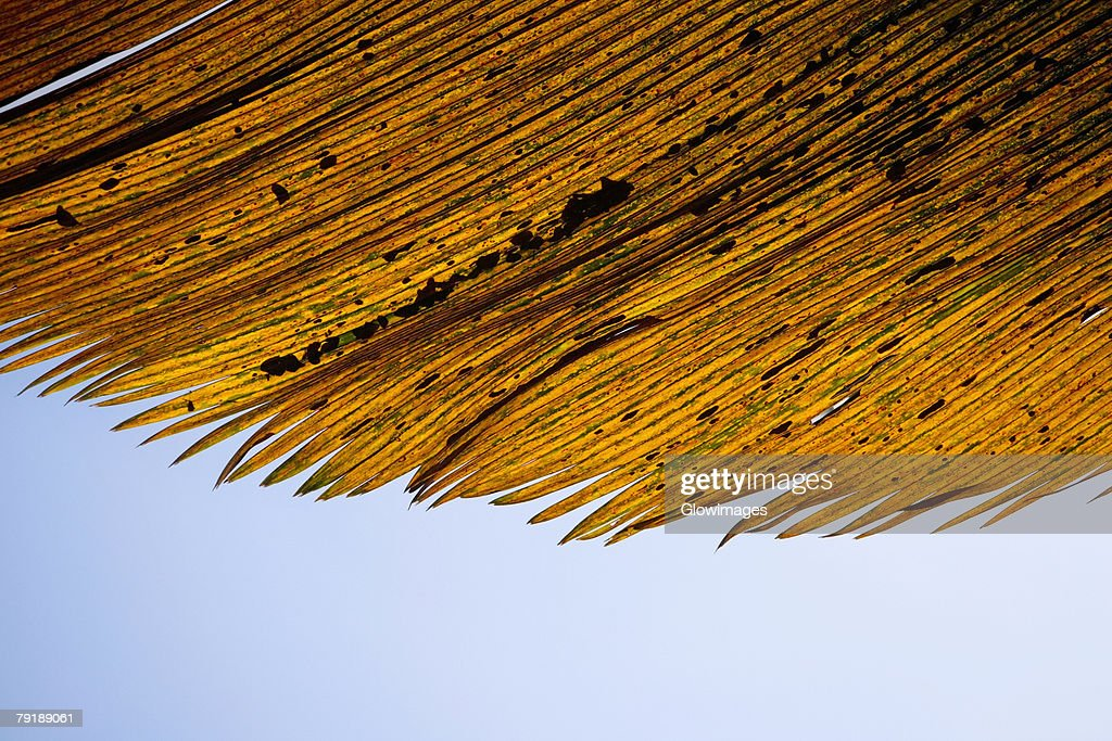 Close-up of dry leaves, Hawaii Tropical Botanical Garden, Hilo, Big Island, Hawaii Islands, USA : Foto de stock