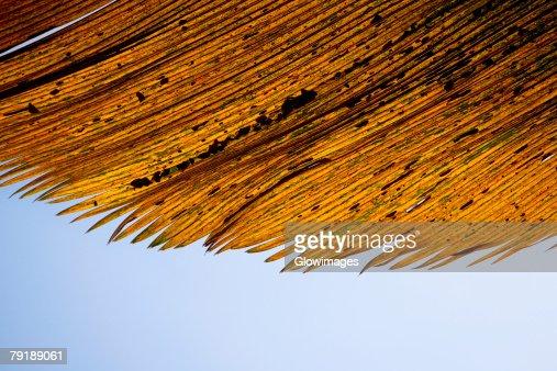 Close-up of dry leaves, Hawaii Tropical Botanical Garden, Hilo, Big Island, Hawaii Islands, USA : Foto de stock