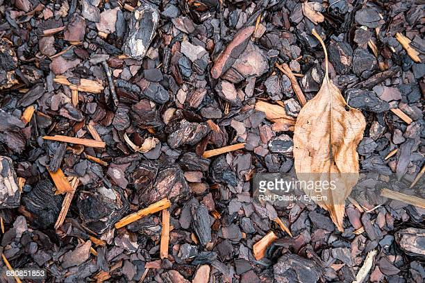 Close-Up Of Dry Leaves On Ground
