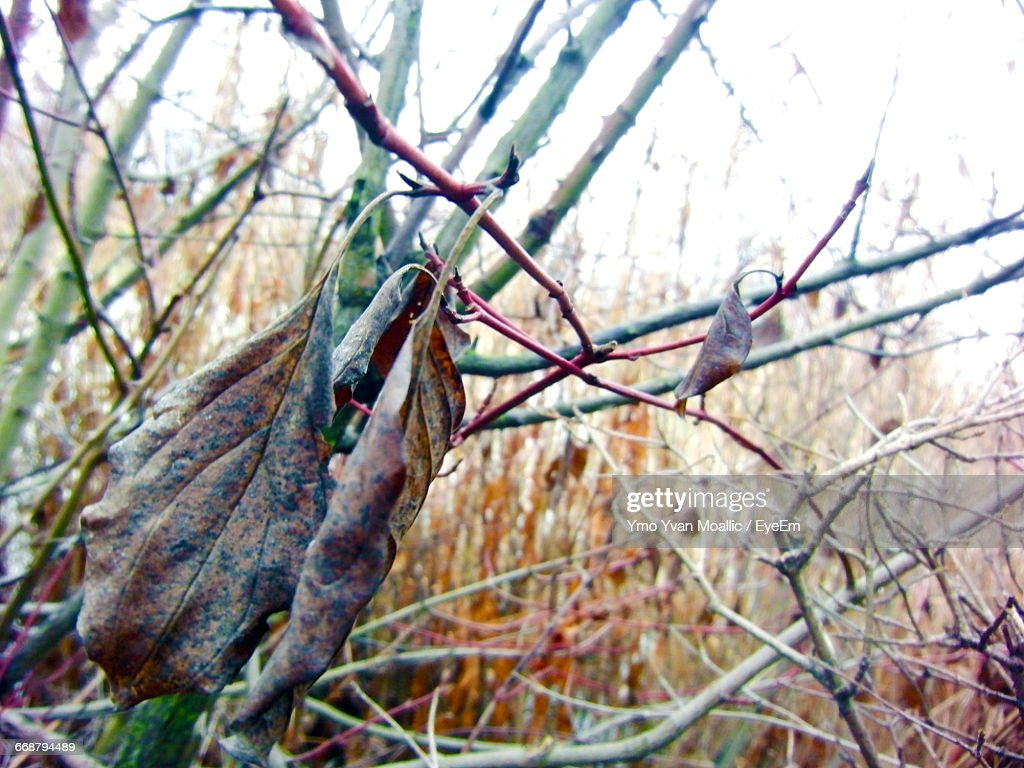 Close-Up Of Dry Leaves : Stock-Foto
