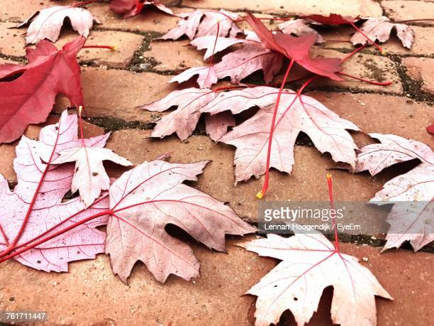 Close-Up Of Dry Maple Leaves Fallen On Autumn